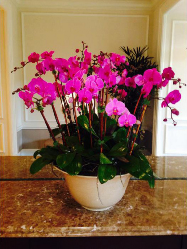 Csorchids-Commercial-Leasing1