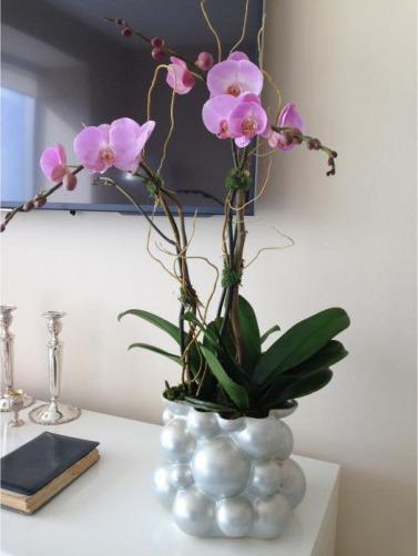 Csorchids-Commercial-Leasing2