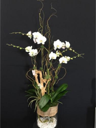 Csorchids-Commercial-Leasing4