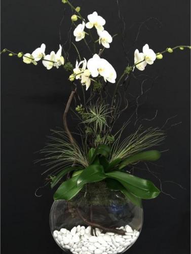 Csorchids-Commercial-Leasing5