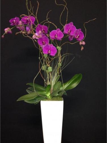 Csorchids-Gifts5