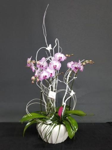 Csorchids-Gifts9