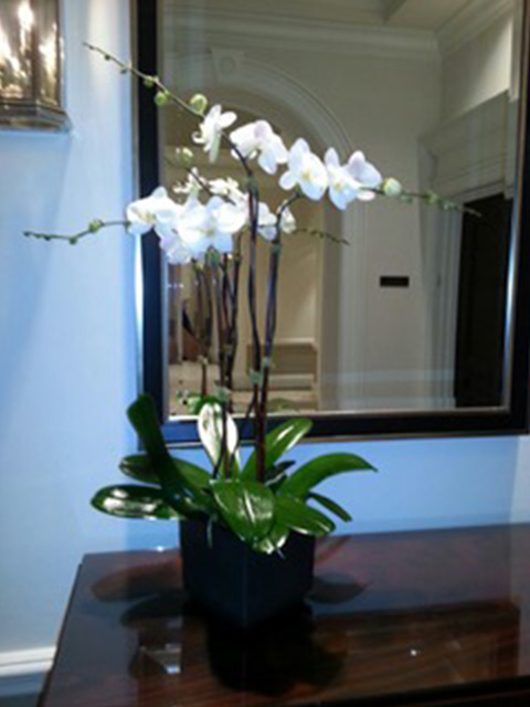 Elegant Orchid arrangement in Miami